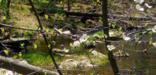 dogwood across creek
