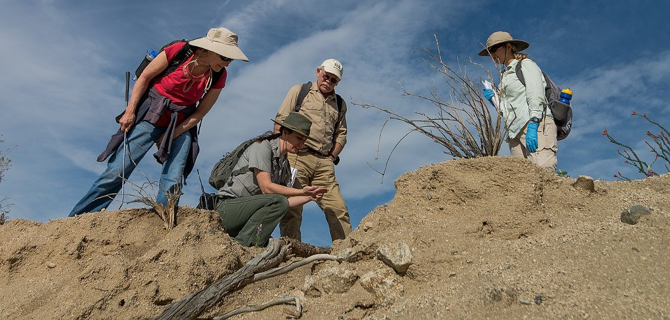 Park ranger kneeling in sandy soil with three volunteers