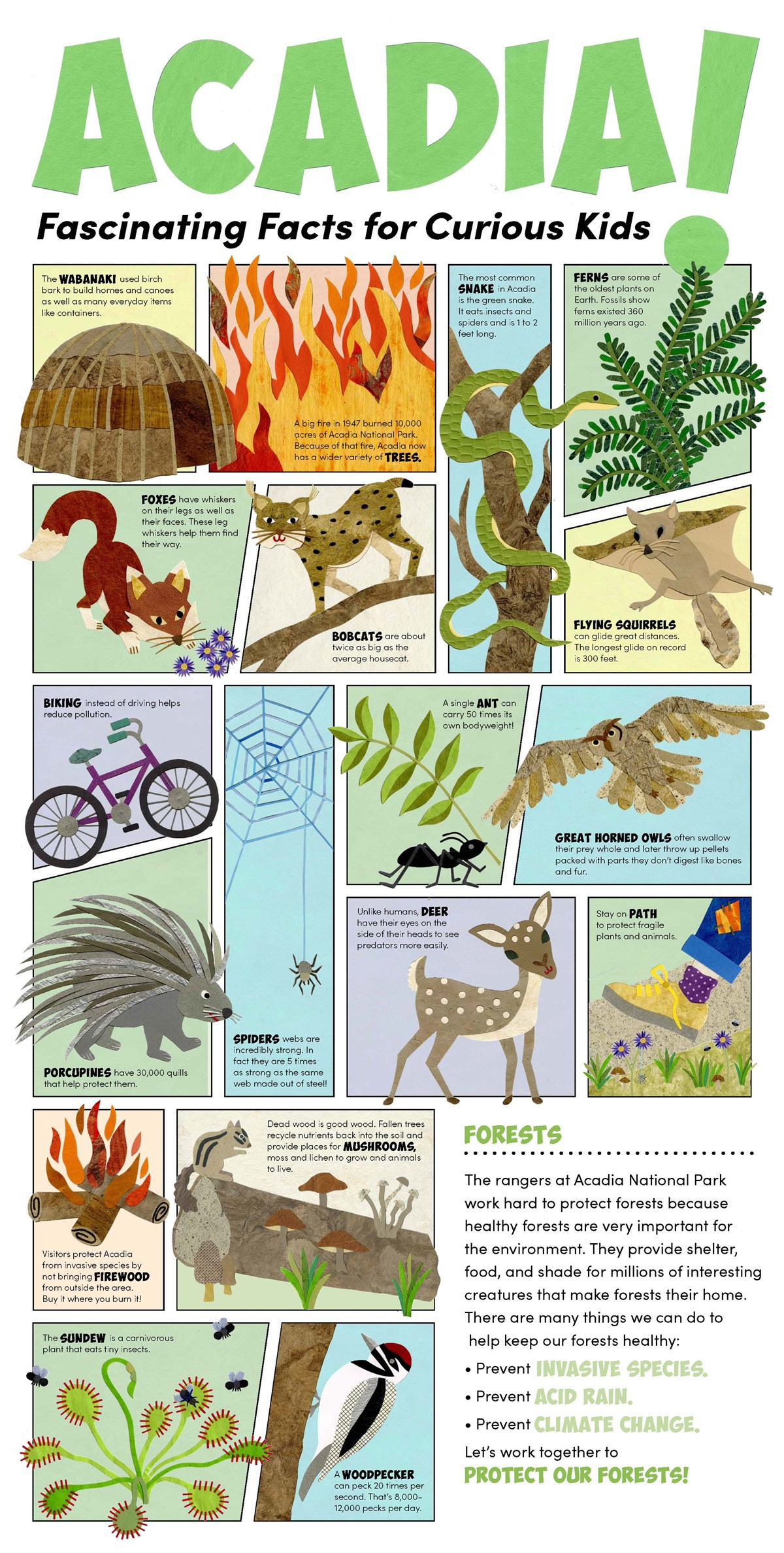 Children's poster with many different graphics and text explaining different fun facts about the cultural and natural resources of Acadia National Park. This poster focuses on forests and the images are made from cut paper.