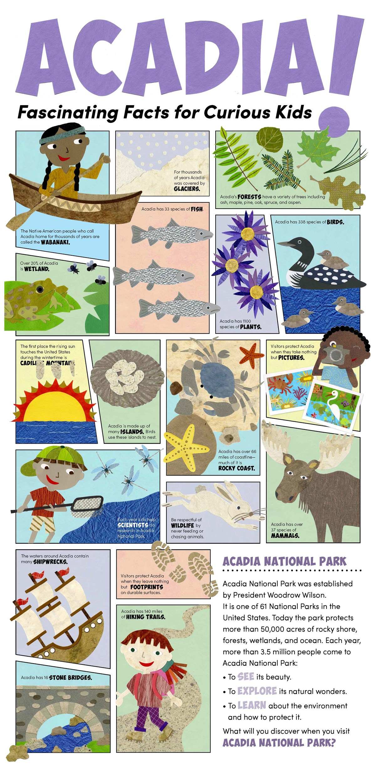 Childrens poster with many different graphics and text explaining different fun facts about Acadia National Park.