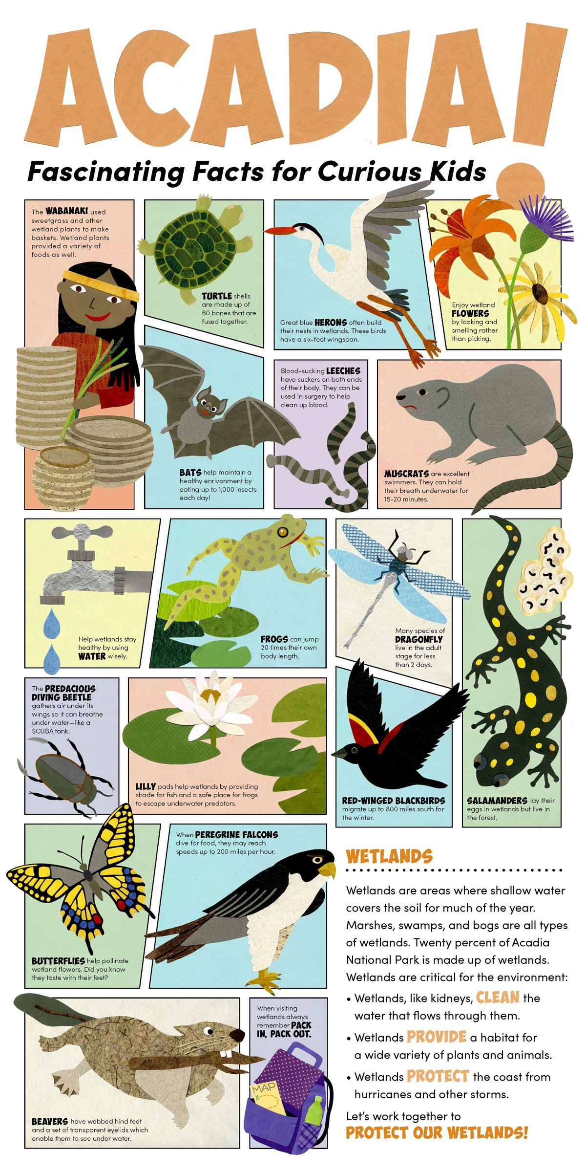 Children's poster with many different graphics and text explaining different fun facts about the cultural and natural resources of Acadia National Park. This poster focuses on wetlands and the images are made from cut paper.