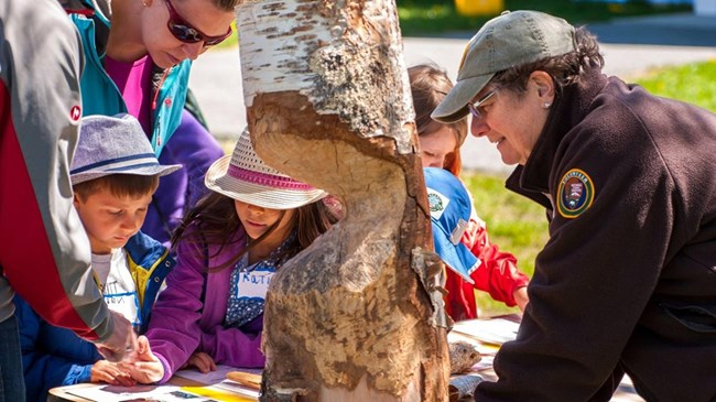 On the right bottom corner, an older woman, wearing a National Park Service volunteer uniform leans over a table covered with papers. A section of a birch tree, with chew marks from a beaver separates her from several children at the left of the table.
