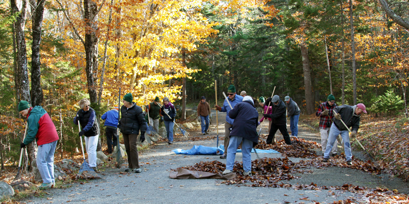 Volunteers rake leaves along a carriage road during the 2011 Take Pride in Acadia Day, co-sponsored by Friends of Acadia.