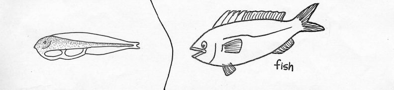 fish and larvae hand drawn image