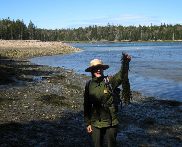 Ranger holding rockweed and overlooking the harbor