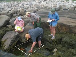 Teachers inspecting tidepools and taking notes while a ranger looks on.