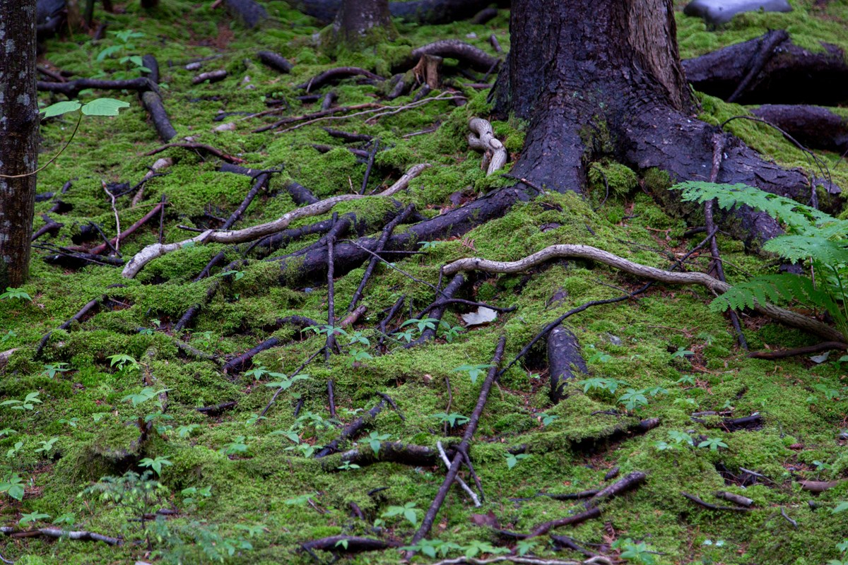 Roots and moss along a forest floor