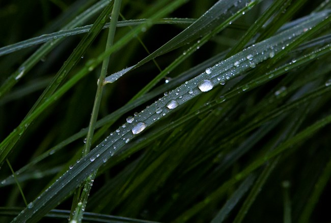 Detailed image of blades of grass with water droplets