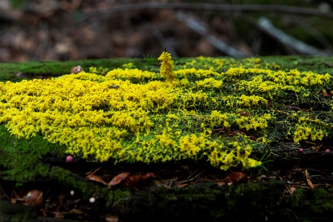 Detailed image of green and yellow moss