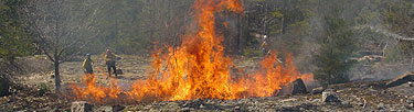 Fire management staff control a prescribed fire.