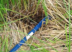 A stick is used to look for an ant nest in the grass.