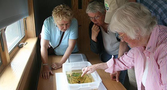Three women look at insects in a pan of water.