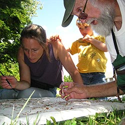 Man, woman, and child look for insects on a sheet.