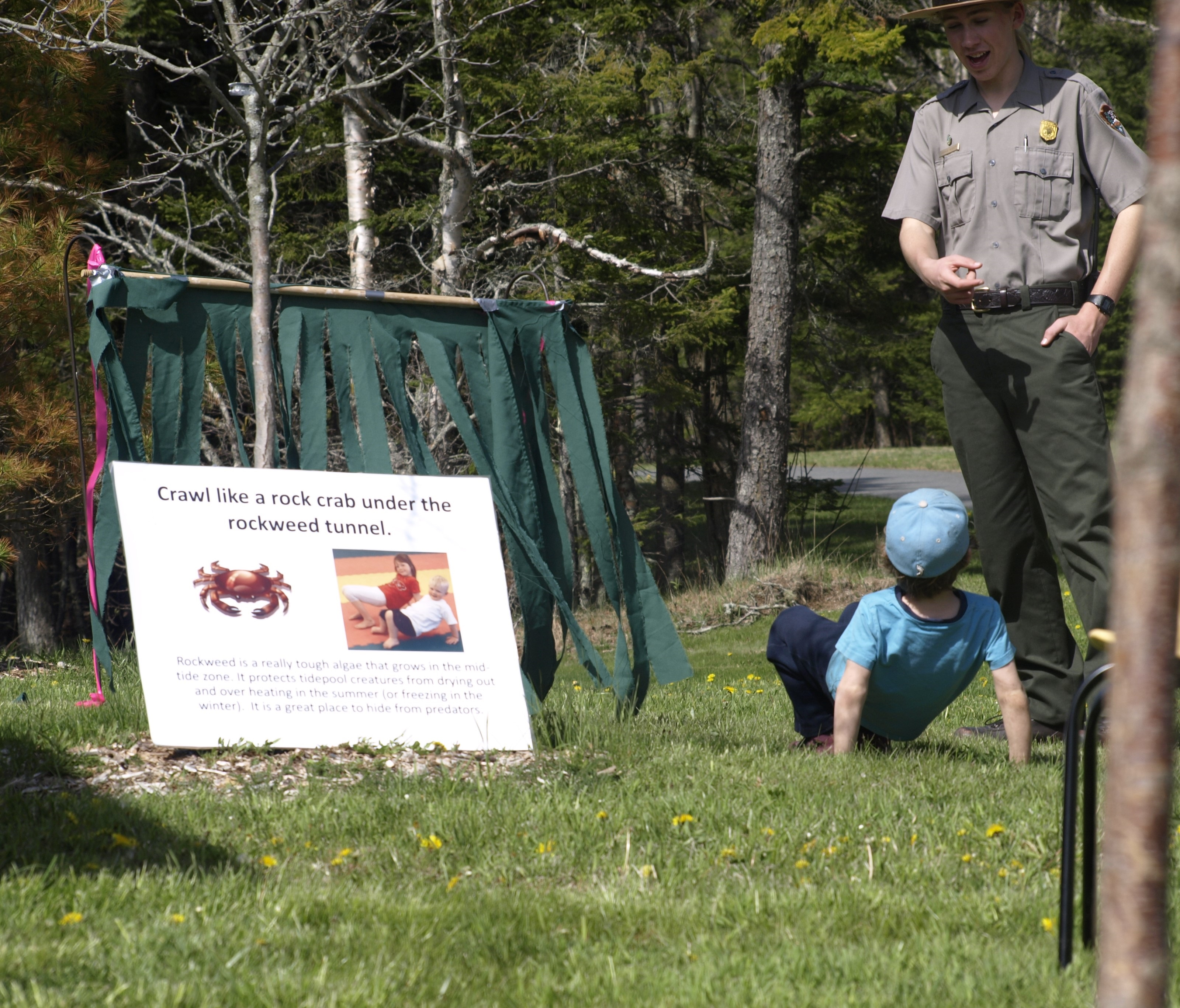 Park ranger Seamus Russet teaches Junior Rangers to crawl like a crab under the rockweed tunnel