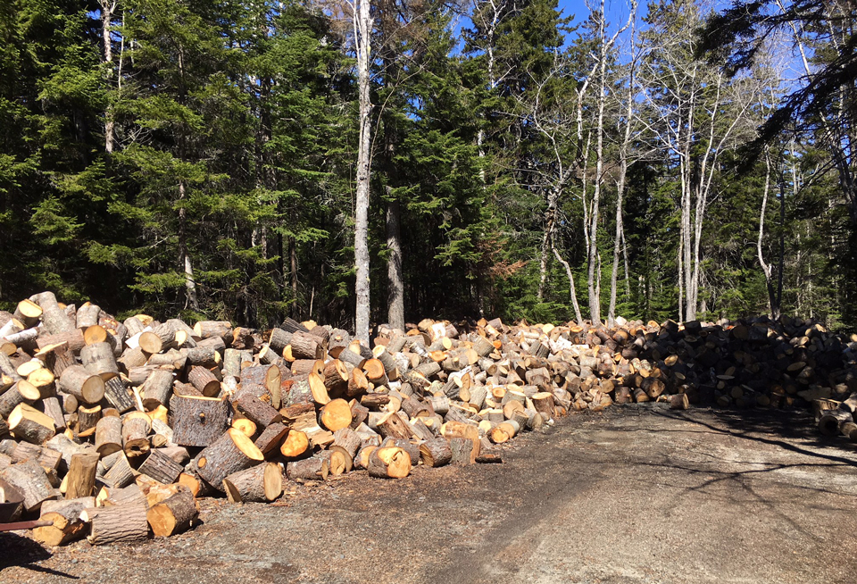 Pile of wood rounds in front of standing trees and blue sky