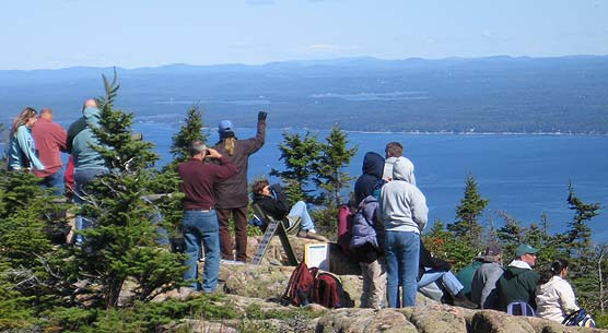 Group searches for hawks above Cadillac Mountain.
