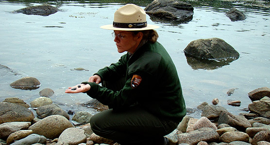 Park ranger crouches at water's edge holding a rock to show others.