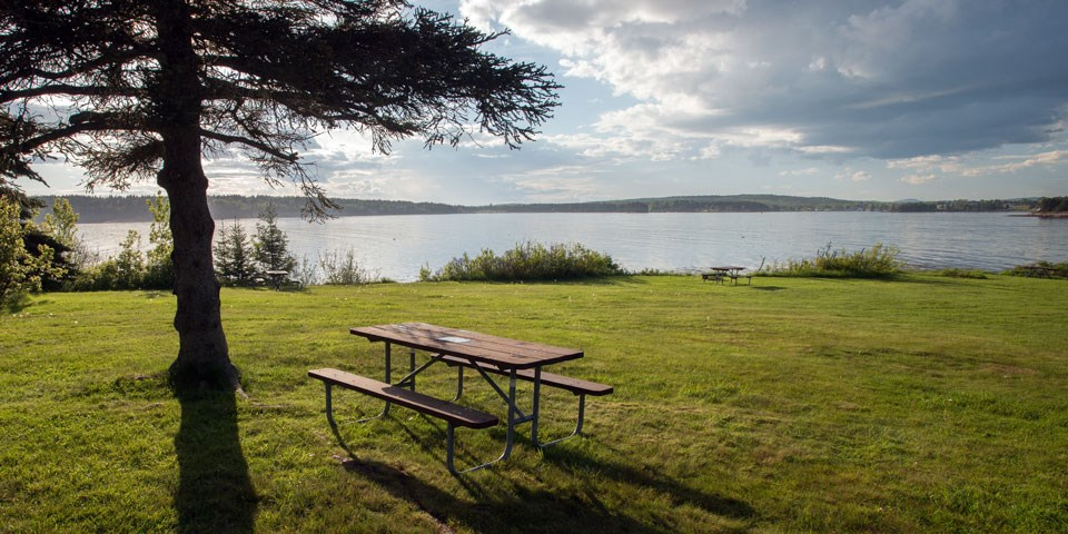 Picnic tables, grass, and trees along Schoodic coastline