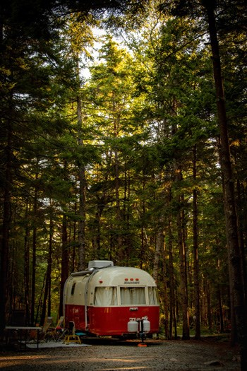 Vintage red and white camper parked within tall trees