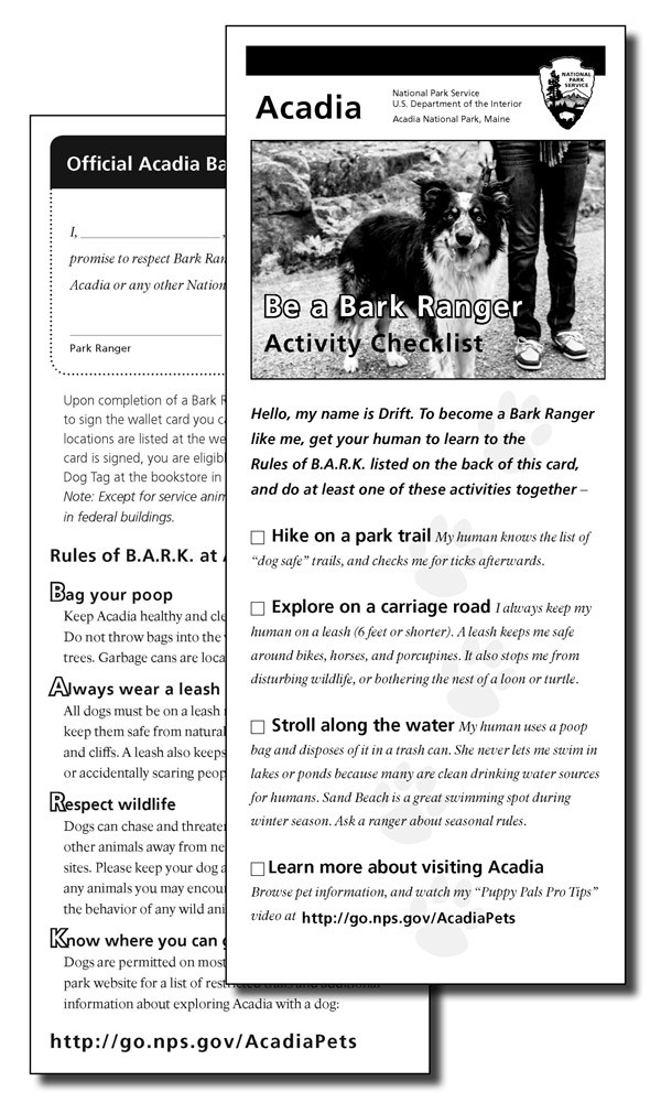 Bark Ranger Activity Sheet