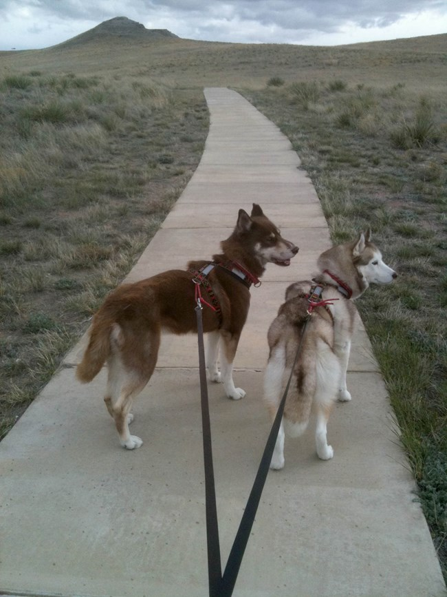 Two leashed dogs ready to hike the paved trail to the fossil hills.