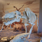 Daeodon in Agate Fossil Beds diorama