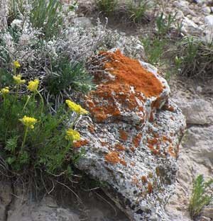 Bright orange lichen covers many rocks on the hills.