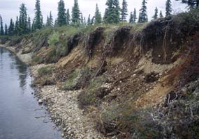 Riverbank erosion on the Alagnak