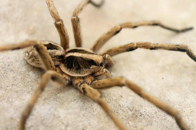 Field Guide to Spiders and Scorpions - Amistad National