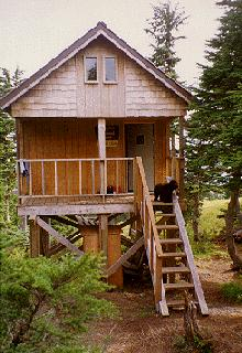 US Forest Service public use cabin on a raised platform with a black dog at the top of the stairs