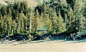 A picture of a cabin almost entirely obscured by a stand of trees at Kenai Fjords National Park