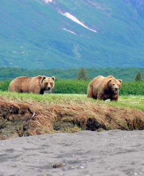Bears in Alaska NPS