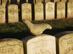 Stone dove on top of a headstone