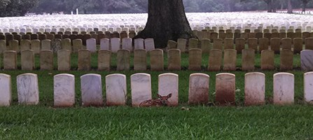 Fawn resting against a row of white marble headstones
