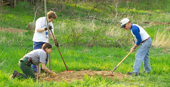 Edlerhostle volunteers plant trees in the historic West Woods.