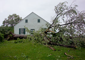 Tree down at the Dunker Church right after the storm