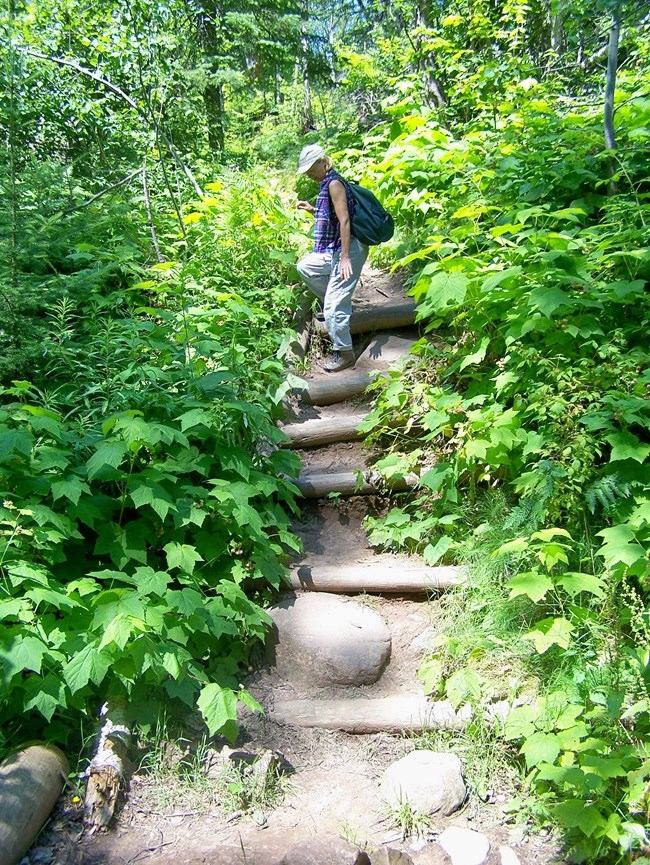 A hiker carefully steps down one of six eroded log steps.