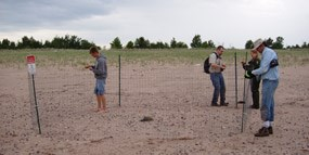 Plover Enclosure on Long Island