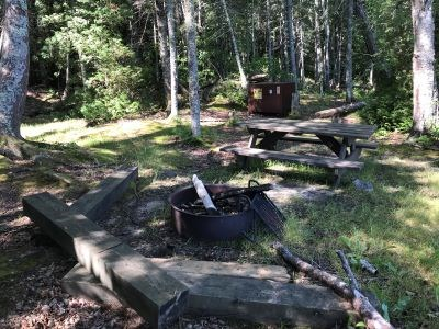 A forested campsite with a metal fire ring and bear proof box.