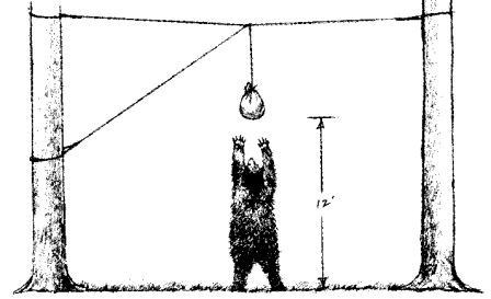 Picture of a bag hung with rope, 10 feet above the ground and 5 feet from the tree's trunk. A small bear is reaching up towards the bag, but cannot reach it.