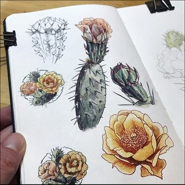 watercolor illustrations of prickly pear pads and flowers