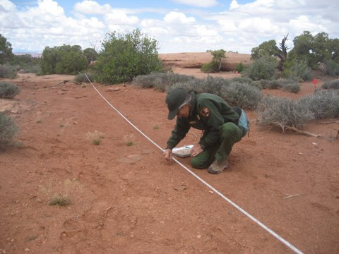 a ranger kneels next to a measuring tape stretched across an area of bare ground