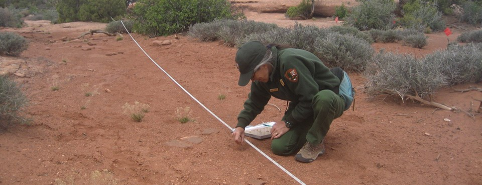 a ranger kneels next to an area of soil