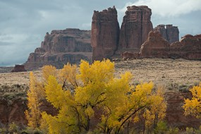 trees with yellow leaves in front of stone monoliths