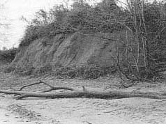 (photo) Figure 4. Present appearance of site after conservation measures.
