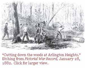 Cutting timber in Arlington Forest