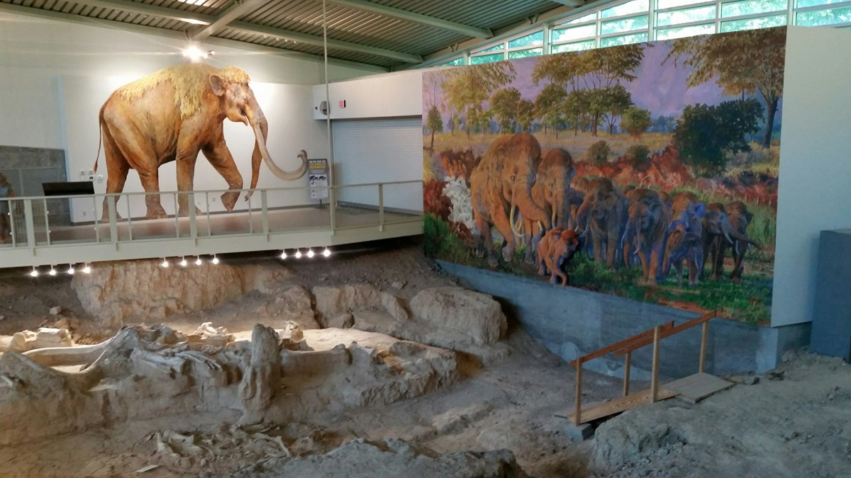 fossil bone bed and murals of mammoths