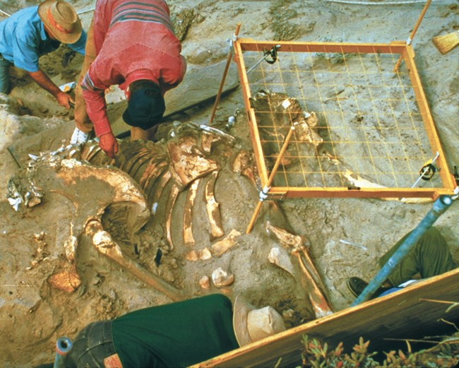 3 people working on a fossil excavation with bones exposed