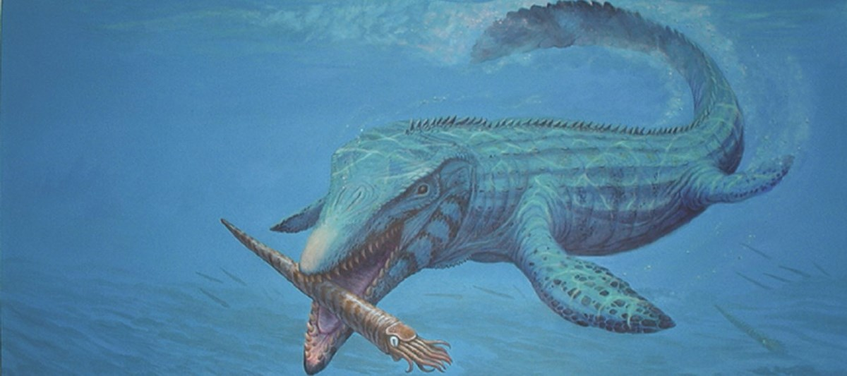a marine reptile swims through water and closes its jaws around a long, shelled squidlike creature