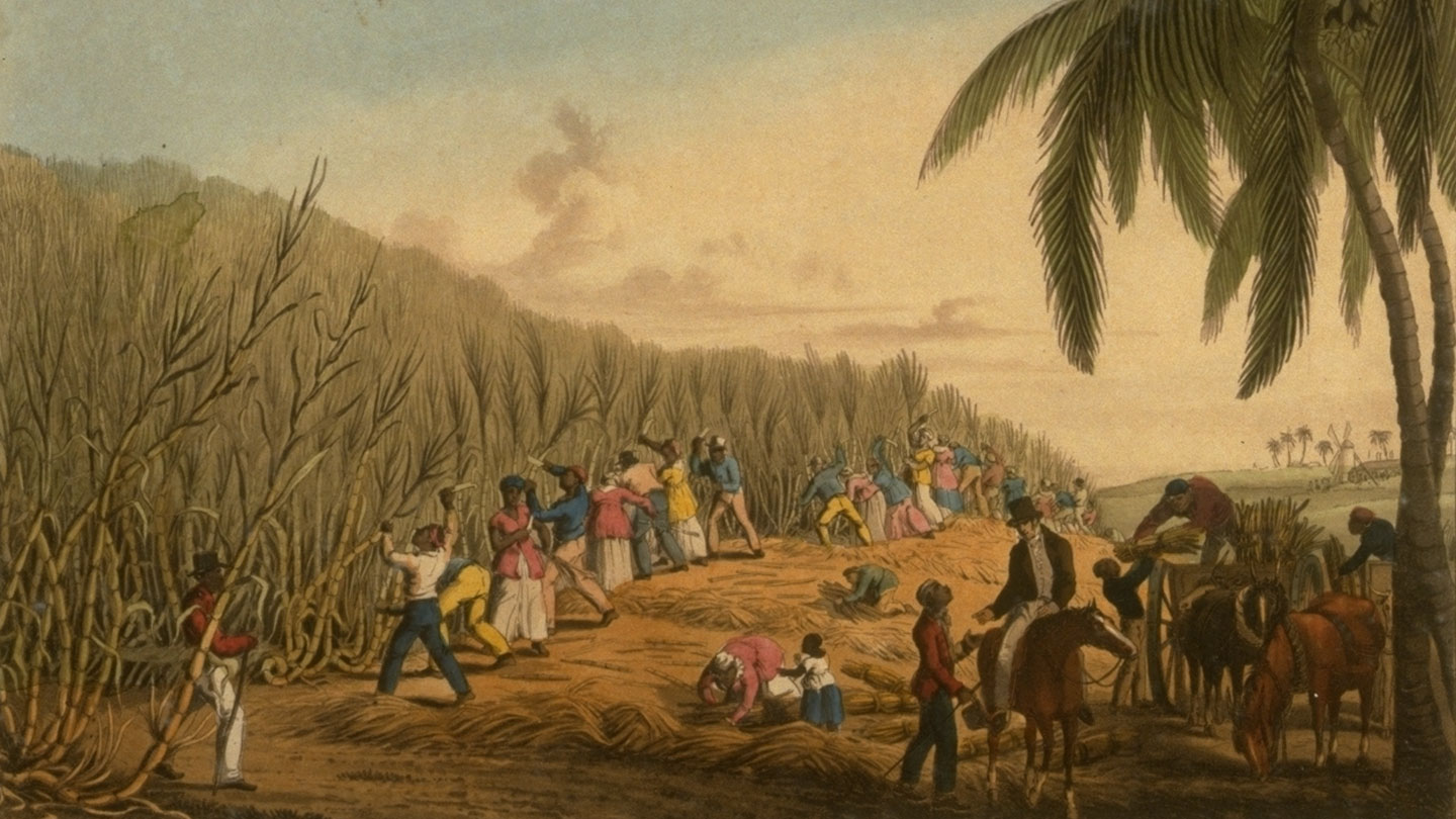 Color print showing black enslaved workers cutting tall sugar cane stalks in a field.